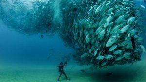 ماهیان اقیانوس