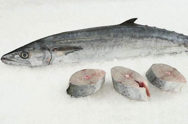 ماهی شیر درون یخ