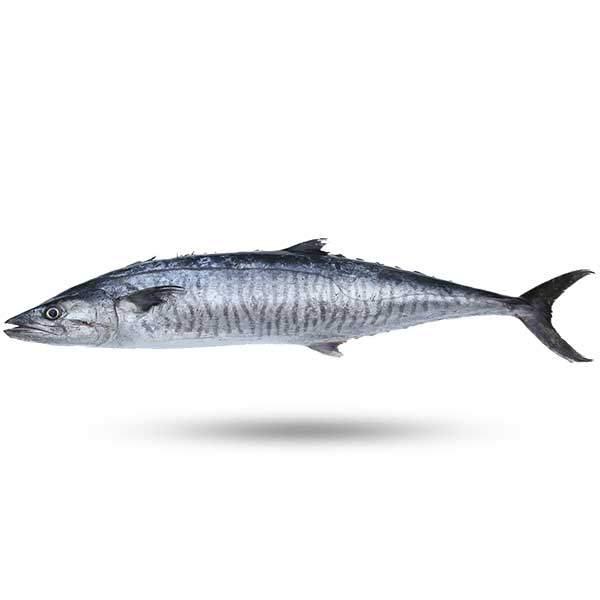 شیر ماهی