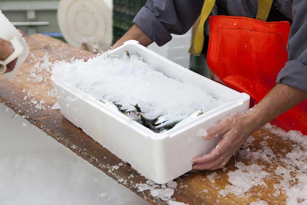 جما و نقل ماهی