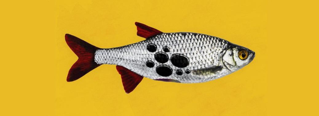 ماهیان دارای جیوه